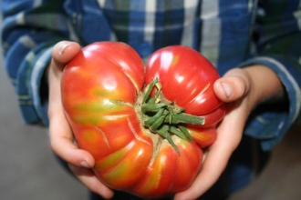 We heart tomatoes