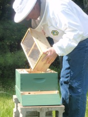 Bee Hive Arrival