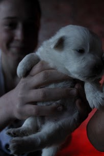 Finn and puppy