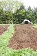 Plot tilled by pigs