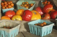 farm store tomatoes