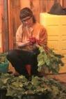 Lulu banding beets