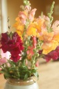 snap dragons at table