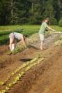 deb and colin planting