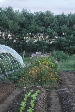 flower bed at dusk