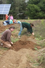 Digging Potatoes