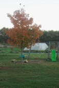 maple and playset